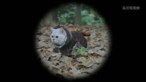 电视猫MV(推广版)