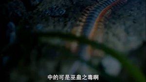 6.5龙虎山张天师