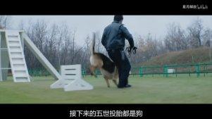 6分钟看完美国催泪大片《一条狗的使命》看狗狗五次重生轮回探索生命的意义