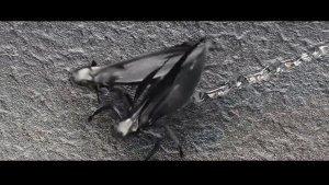 外星文明带来的这种虫子侵袭地球,后果很严重