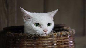 猫侍:叔与猫的欢脱日常