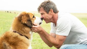 陪伴是最长情的告白,看狗狗五次重生轮回探索生命的意义