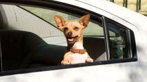 【劳拉】一路碰贵狗相助的宠物电影《比佛利拜金狗》解说