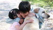 狗狗跟着主人流浪,用生命救下自己的主人,感人至深!