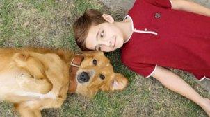 《一条狗的使命》 片段之金毛犬