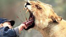 8个世界最惊人的宠物,没有野性的狮子你见过吗?