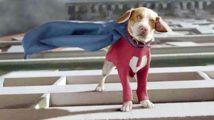 美国超人狗,会飞的超能力狗,秒杀超人
