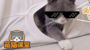 宅男用旧T恤制作猫咪帐篷,快来学起吧!
