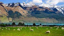超多人想到这个国家当农民:年收入超100万,还能世界旅游!