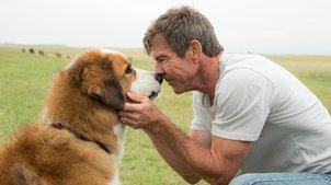 这只狗看哭了全球10亿人,经过四世轮回,只为找到曾经的主人
