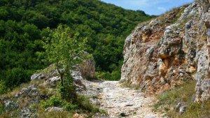 悬崖村的天梯