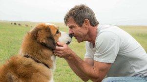 不管你养不养狗,这部电影都会让你哭成一条狗