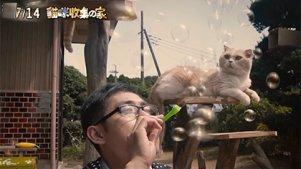 注意!猫咪含量过多!《猫咪收集之家》