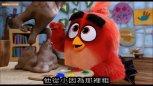 谷阿莫今天说一个抢蛋的故事,男主角都是男主鸟了
