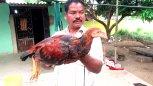 实拍印度家庭做饭,抓只鸡炖一锅吃顿好的,这家人生活条件不错