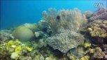 实拍:国内两90后女孩,在国外玩海底探险,钓到超级大龙虾