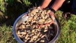 实拍印度村民做饭,煮一锅鼹鼠蟹吃,这种螃蟹我还是第一次见呢