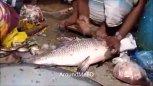 实拍印度人民在鲜鱼市场切割鱼肉的场景,那把刀真吓人