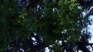 重温经典:《阿凡达》中男主的驯龙飞天过程!魅影骑士当之无愧!