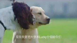 《警花与警犬》小编带你们领略忠诚警犬回家路!
