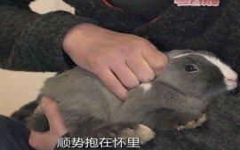 这样的诡异姿势抱兔子,确定不会被兔子搞死吗