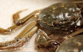 如何保存鲜活的大闸蟹