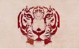 7月29日全球老虎日,希望大家花费几分钟一起来关注野生老虎