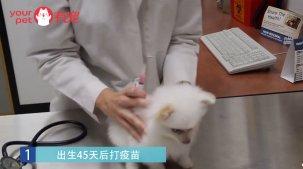 什么时候给狗狗打疫苗最合适,差一天就可能让它一命呜呼!