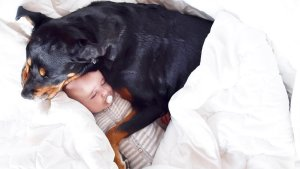 萌宝与罗威纳犬的日常