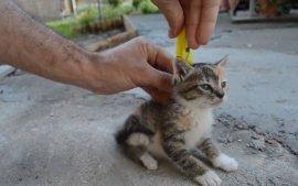 国外网友教你一招制服好动顽皮的小小猫,真神奇!