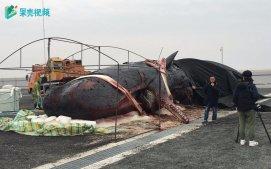 鲸:庞然大物的最后温柔