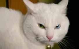 一秒钟学会说猫话,让你知道猫到底在想啥!
