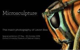 昆虫摄影师—带你进入一个微观昆虫世界!