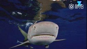 问:年度国庆朋友圈摄影大赛,如何旗开得胜?答:把海底鲨鱼摄影,玩转了,百战百胜。妙招在此,拿去不谢[二哈][二哈][二哈]