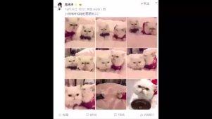 范冰冰确定是晒猫,不是晒恩爱?