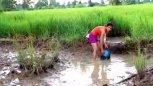 实拍:柬埔寨小情侣在稻田边的泥地里捉鱼