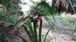 实拍农村残疾小伙在田里捉大水蛇,身残志坚值得尊敬