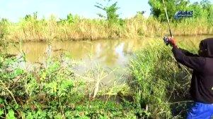 实拍柬埔寨农村钓泥鱼,一下一条令人羡慕