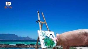 """猪界的""""毕加索"""":世界上唯一一头会画画的猪"""