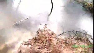 实拍:农村姑娘把塑料瓶埋进河边泥里,竟然是为了抓蛇,好多蛇!