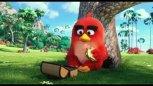 《愤怒的小鸟》电影版 先行预告