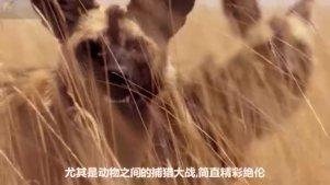 真实世界的动物大战,远比电影更精彩