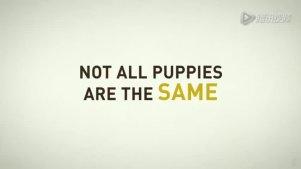 导盲犬小Q,超清版预告片