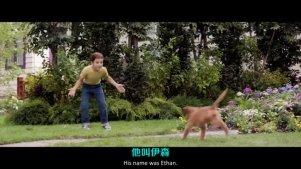 《一条狗的使命》催泪超清预告片